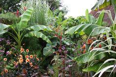 DDS Webmail :: Je bent lekker aan het pinnen! Hier zijn 8 nieuwe pins voor je bord tropical tropical