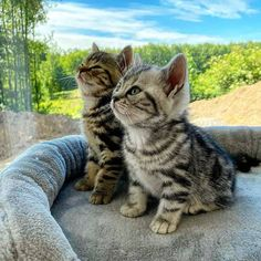 Must See This Incredible Volunteer Visits Animal Shelter Every Day to Nap With Cats Cute Fluffy Kittens, Cute Cats And Kittens, Baby Cats, Kittens Cutest, Cute Little Animals, Cute Funny Animals, Beautiful Cats, Animals Beautiful, Gatos Cats