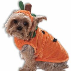 Check out the top 10 Halloween Dog Costumes