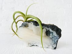 Air Plant Crystal Garden  White Point Druze by EarthSeaWarrior on Etsy