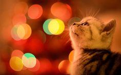 Waiting for Christmas.