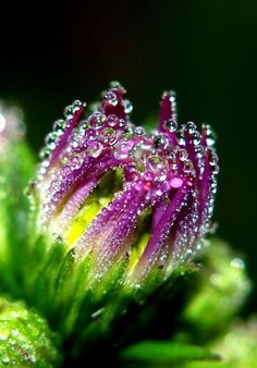 Dewdrops on Flowers - Nice Photo