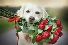 From your dog with love Cute Little Animals, Cute Funny Animals, Nature Animals, Animals And Pets, I Love Dogs, Cute Dogs, Good Morning Friends Images, Flowers For Mom, Red Flowers