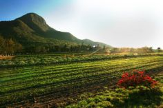 ONE OF OUR NUTRILITE ORGANIC FARMS