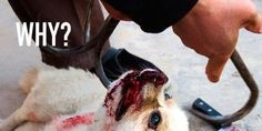 SAY NO TO THE WORLD DOG SHOW IN PET MURDERING CHINA