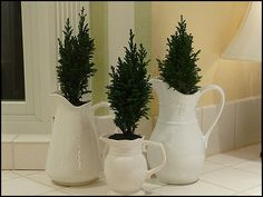 Simple mini trees in white pitchers for your Christmas kitchen