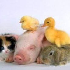 Like puppies, bunnies, babies, and so on. A place for really cute pictures and videos! Animals Images, Animal Pictures, Cute Pictures, Cute Baby Animals, Animals And Pets, Animal Babies, Farm Animals, Cute Puppies And Kittens, Animal Hugs