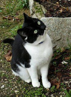 Strange Feline Patterns - Masked Cat