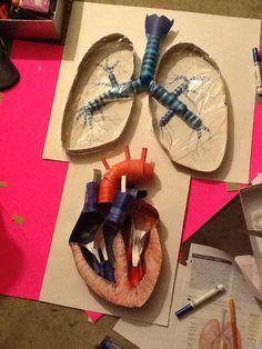 Heart and Lungs Models by LukePham.deviantart.com on @deviantART