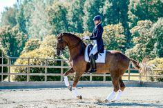 Pretty Horses, Beautiful Horses, Race Horse Breeds, Boy Poses, Horse Photography, Equestrian Style, The Ranch, Horseback Riding, Horse Riding