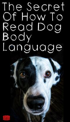 You can decipher doggie language when you know what your looking for. Learn to read dog signals and body language with these tips. Baby Puppies, Pet Puppy, Dog Body Language, Buy A Dog, Dog Information, Bichon Frise, Old Dogs, Dog Behavior, Dog Care