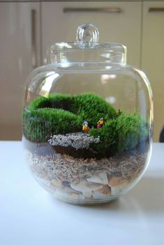 Terrarium Cactus, Terrariums Diy, Terrarium Scene, Garden Terrarium, Air Plants, Indoor Plants, Bonsai, Moss Plant, Indoor Water Garden
