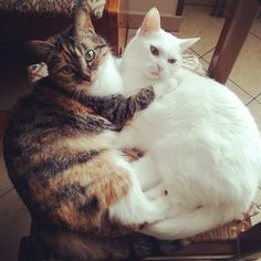 #cats #catsofinstagram #mirror #love #sisters by @ladyesammy cat enclosures Like us on Facebook! Follow us on Instagram! Follow us on twitter! Follow us on Pinterest!  cat cats kitty cute catlover catsofinstagram catcam instacat catstagram catsagram lovecats cat product reviews