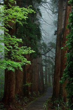 Forest Path, Mt. Haguro, Yamagata, Japan    photo via erika