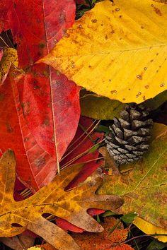 ✯ Colors Of Autumn