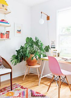 bungalow belonging to interior designer claire zinnecker.  Love this gorgeous rug and the cheese plant... and the chair!!