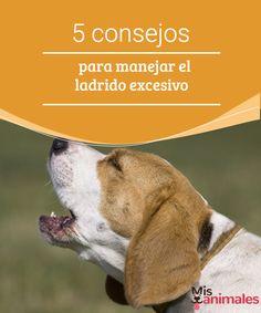 5 consejos para manejar el ladrido excesivo En ocasiones el ladrido es una actividad compulsiva y será necesario tomar medidas que te permitan manejar el ladrido excesivo de tu perro.