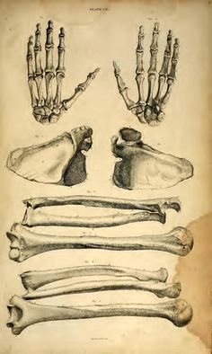 A tribute to the art in medical science. Animal Anatomy, Human Anatomy, Forensic Anthropology, Medical Science, Forensics, Physiology, Archaeology, Skull, Animals