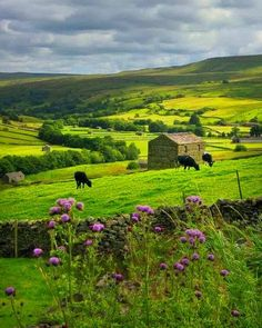 Yorkshire Dales, England photo via briana Yorkshire Dales, Yorkshire England, Cornwall England, North Yorkshire, England Uk, London England, British Countryside, England And Scotland, Cumbria