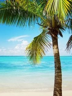 A collection of tropical beach pictures - Clear water Beach Florida