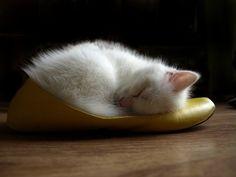 I love this funny sleeping cat #funnycat #funnycats #cats#Katzen #KatzenliebenSchuhe #Schuhe #catsloveshoes #shoes