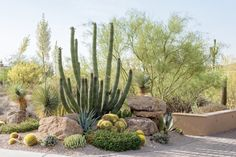 Beyond the Ordinary - Phoenix Home & Garden Landscaping With Boulders, Outdoor Landscaping, Front Yard Landscaping, Outdoor Gardens, Arizona Landscaping, House Landscape, Landscape Design, Garden Design, Desert Landscape