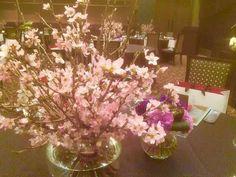 2016.3.20.SPM.桜.jpg