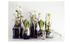 L'inverno è lungo e avere qualche fiore in casa fa sempre piacere. I bulbi, come i giacinti, amaryllis, muscari, narcisi e tulipani che trovi sui banchi dei garden center e [...]