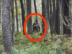 """""""Bigfoot"""" Sighting Causing Quite A Stir. Even more, he says there was a """"Bigfoot calling contest"""" the day before he spotted the creature. Did the calls lure the creature in? Unexplained Mysteries, Unexplained Phenomena, Bigfoot Pictures, Bigfoot Sightings, Bigfoot Sasquatch, Aliens And Ufos, Ufo Sighting, Optical Illusions, Mythical Creatures"""