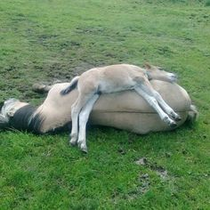 All mothers and babies share a very special bond, and these photos of mares and their foals are just too sweet. All The Pretty Horses, Beautiful Horses, Animals Beautiful, Cute Funny Animals, Cute Baby Animals, Animals And Pets, Funny Pets, Farm Animals, Horse Pictures