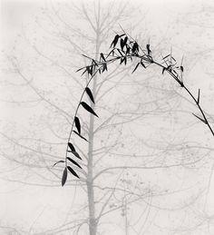 Michael Kenna • Bamboo and Tree, Qingkou Village, Yunnan, China. 2013