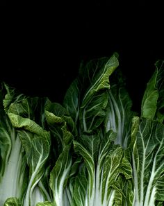 55018 Brassica rapa chinensis by horticultural art, via Fruit Food Photography Styling, Food Styling, Fruit And Veg, Fresh Fruit, Vegetables Photography, Foto Art, Greens Recipe, Raw Food Recipes, Belle Photo