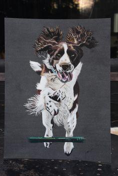 Portrait de chien Artiste Animalier La Galerie de Julie