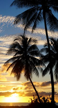 Hey, I found this really awesome Etsy listing at https://www.etsy.com/listing/266134838/palm-tree-sunset-decorations-prints