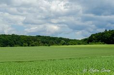 Spaziergang auf dem Feld  #Felder #Landschaft #RemsMurr #Wolken