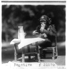 Photo Prompts #017: Chimp Chomp. Photo Credit: Library of Congress, LC-USZ6-1665.