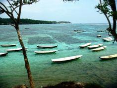 Bali seaweed fields