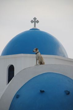 Yes...it really is a dog! Santorini, Greece