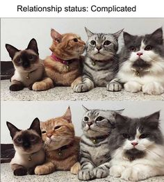 CATS are the most favorite pets in the world. There are so many people are asume that cats are part of their family. Funny Cat Videos, Funny Cats, Funny Animals, Cute Animals, Cute Kittens, Cats And Kittens, Pretty Cats, Beautiful Cats, I Love Cats