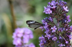 Our Life in Medellin Colombia: Mariposas (Butterflies)