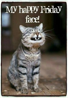 """Kitty-Cat:  """"This is my happy Friday face, ending the week's rat-race; I'm now off to an imaginary place, to live life at a more slower, relaxed pace.""""  (Short Poem Written By: Lynn Chateau © )"""