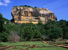 The unmistakeable 'Lion Rock' of Sigiriya, visible for miles around was the site of King Kasyapa's 5th century palace.  The climb to the top is thrilling but not for those suffering from a fear of heights!