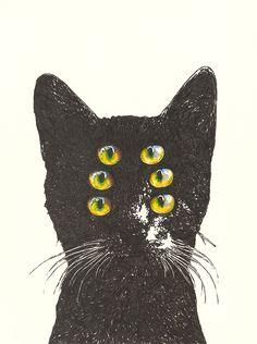 six-eyed cat