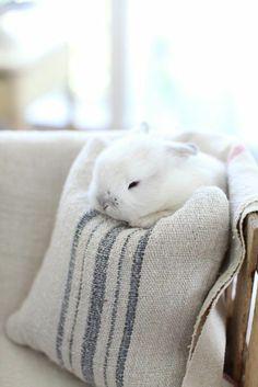 Et après elle dira que je ne lui pose que des petits lapins et pourtant j'étais bien là...ici...bien posé bien présent...  à attendre attendre et encore attendre qu'elle veuille bien venir s'asseoir avec moi et juste me dire bonjour tu vas bien mon lapin...