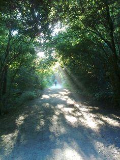 Ai confini del bosco incantato...