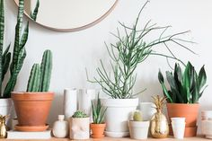 Urban Stems, our favorite flower delivery service, is offering off plant delivery for Apartment Therapy readers until Easter.
