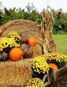 Hay bale, mums & pumpkins create a fun fall vignette: ThistlewoodFarms.com