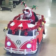 Arriving in style!  This Jack Russell terrier spreads Christmas cheer to patients at the San Gabriel Valley Medical Center in California. Sancho, a 10-year-old Jack Russell terrier, volunteers with his owner every week. Good boy, Sancho! Photo credit: Juliee/Twitter #dog #dogstagram #dogsofinsta #gooddog #christmas #california