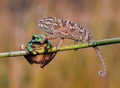 29 prachtige foto's waar geen photoshop aan te pas is gekomen - Roomed | roomed.nl