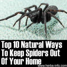 Top 10 Natural Ways To Keep Spiders Out Of Your Home - Herbs Info Cleaning Solutions, Diy Cleaning Products, Cleaning Hacks, Free, Home Remedies, Natural Remedies, Insect Repellent, Spider Repellant, Ideas Prácticas